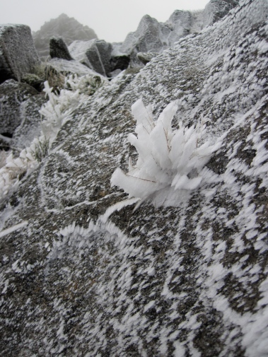 Rime on a boulder and a tuft of grass on Tryfan in Snowdonia National Park, North Wales.