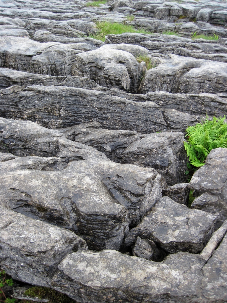 Limestone Pavement_5