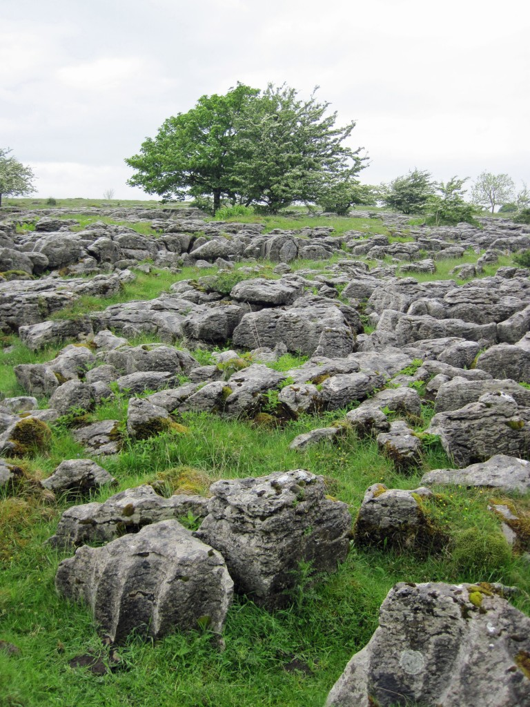 Limestone Pavement_3