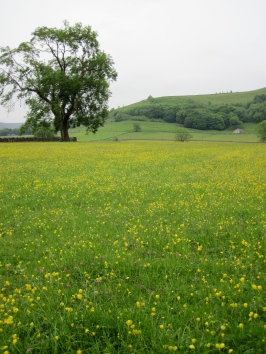 Castleton Meadow