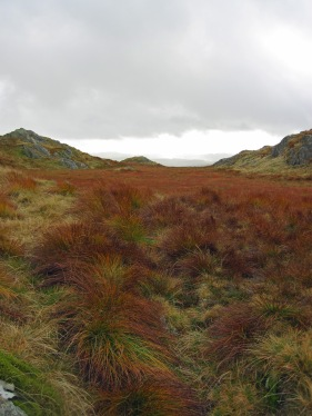 Autumn colours on the fell on Goat Crag in the Lake District.
