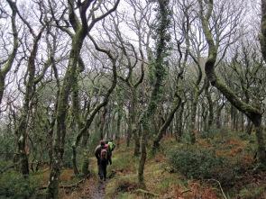 Walking through Worthy Wood.