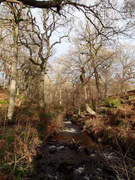 Hood Brook, north of Hathersage.